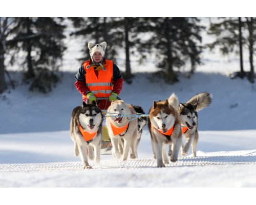 Exciting dog sled ride for 1 person (3km)