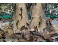 Fish pedicure procedure for two