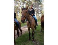 Aizraujoša izjāde ar zirgiem